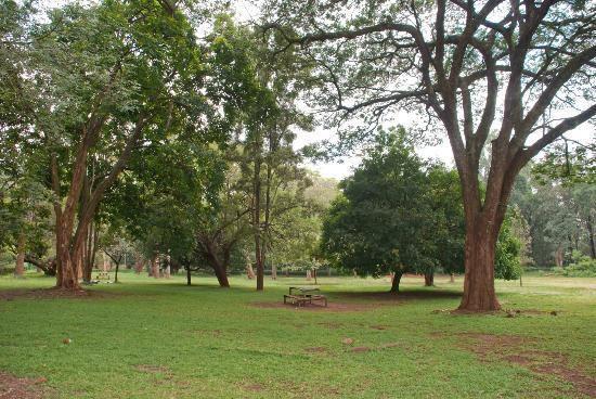 Nairobi Arboretum