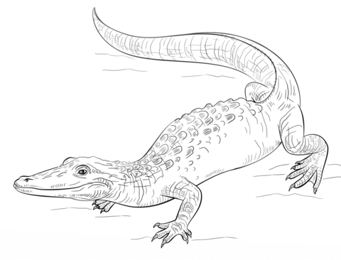 Alligators Coloring Pages for Adults