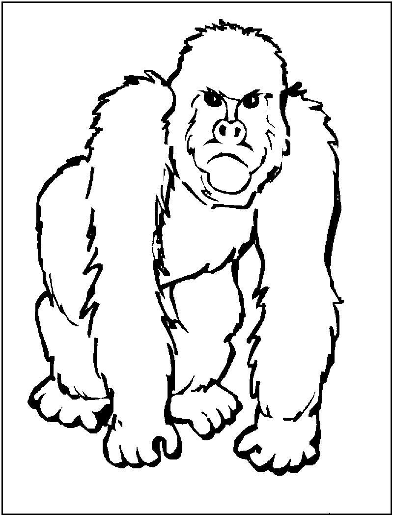 Ape Color Images