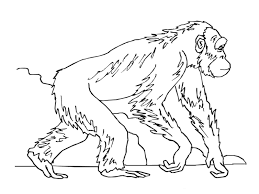 Ape Coloring Pages for Adults