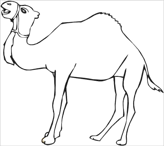 Baby Camels Coloring Pages