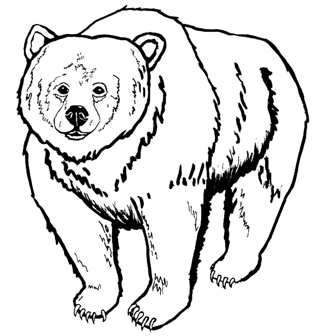 Bears Color Images