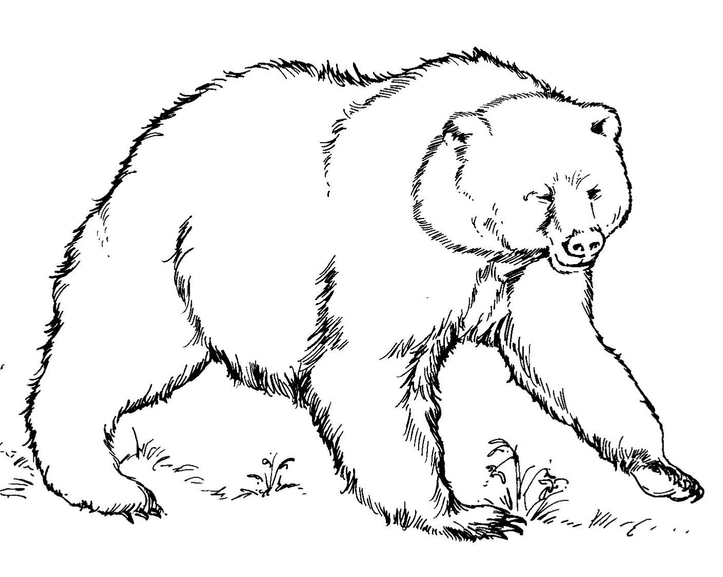 Bears Printable Template