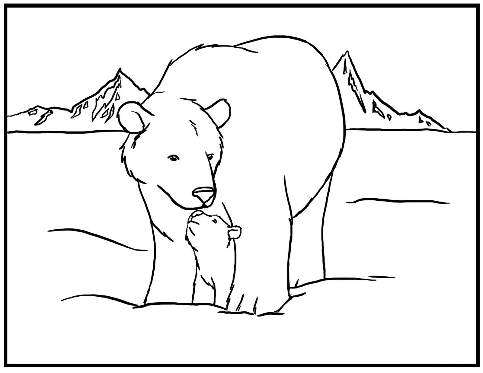 Bears pictures free