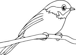 Birds Color Images