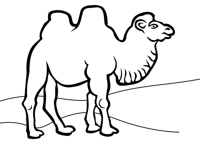 Camels Coloring Pages for Adults