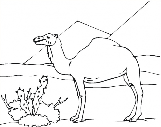 Camels Printable Template
