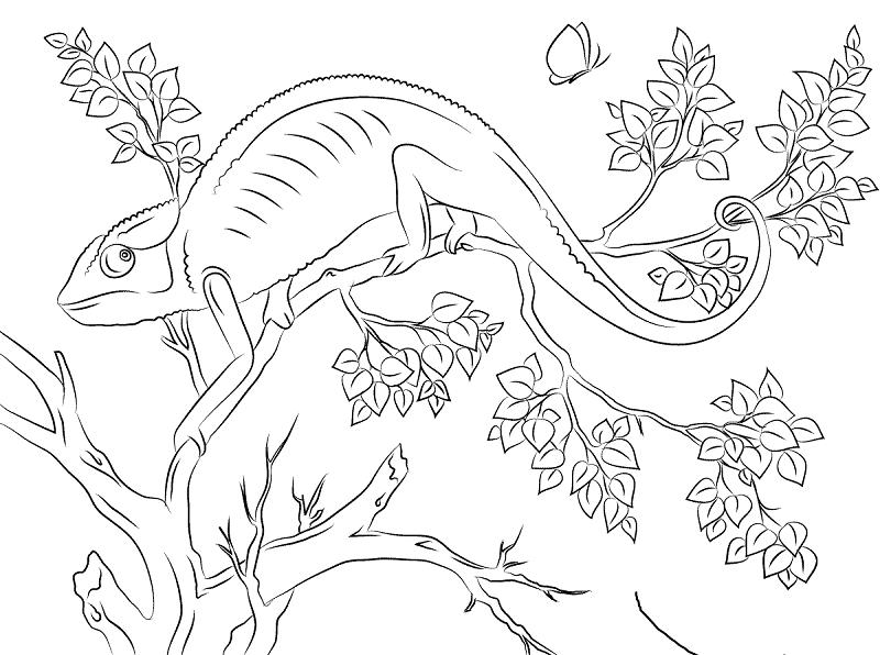 Chameleon Color Images