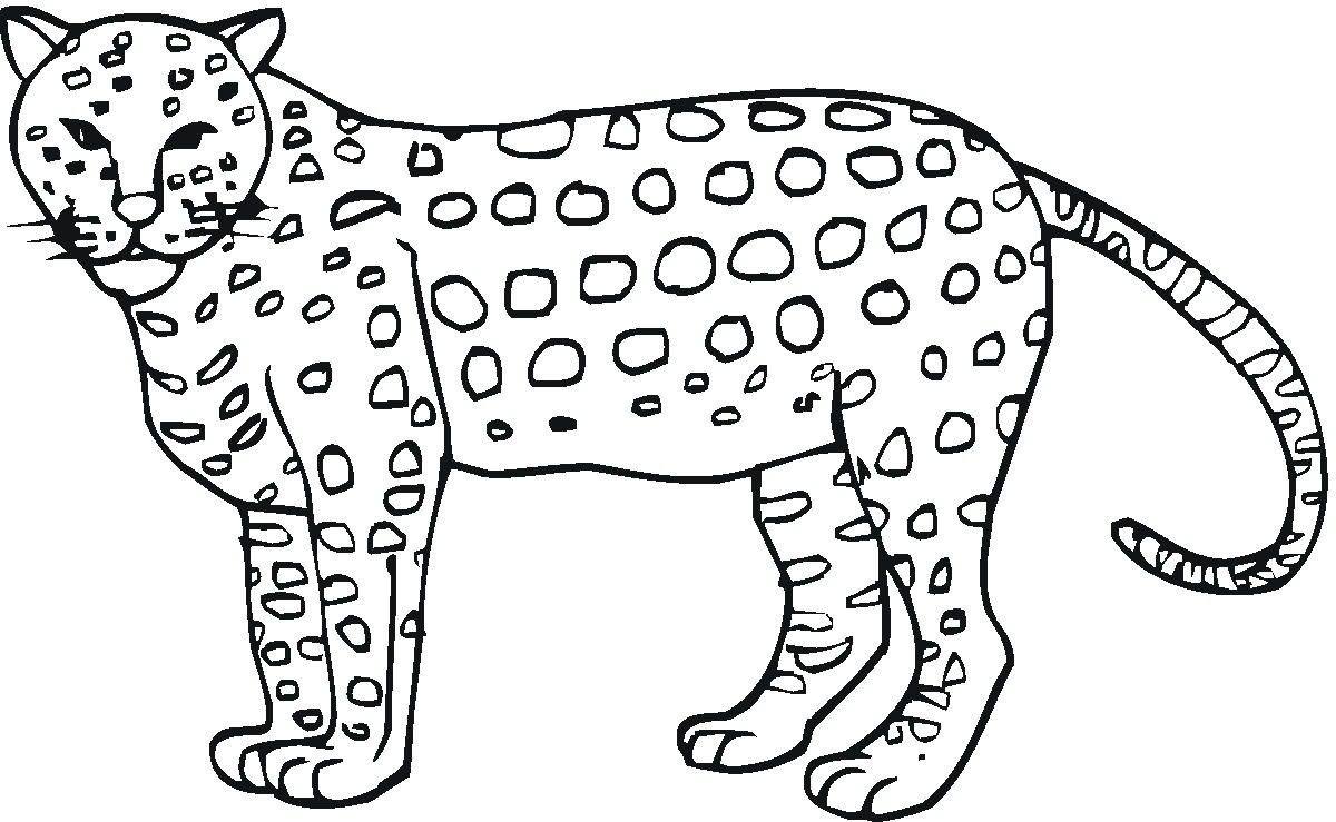 Cheetah Coloring Pages for Adults