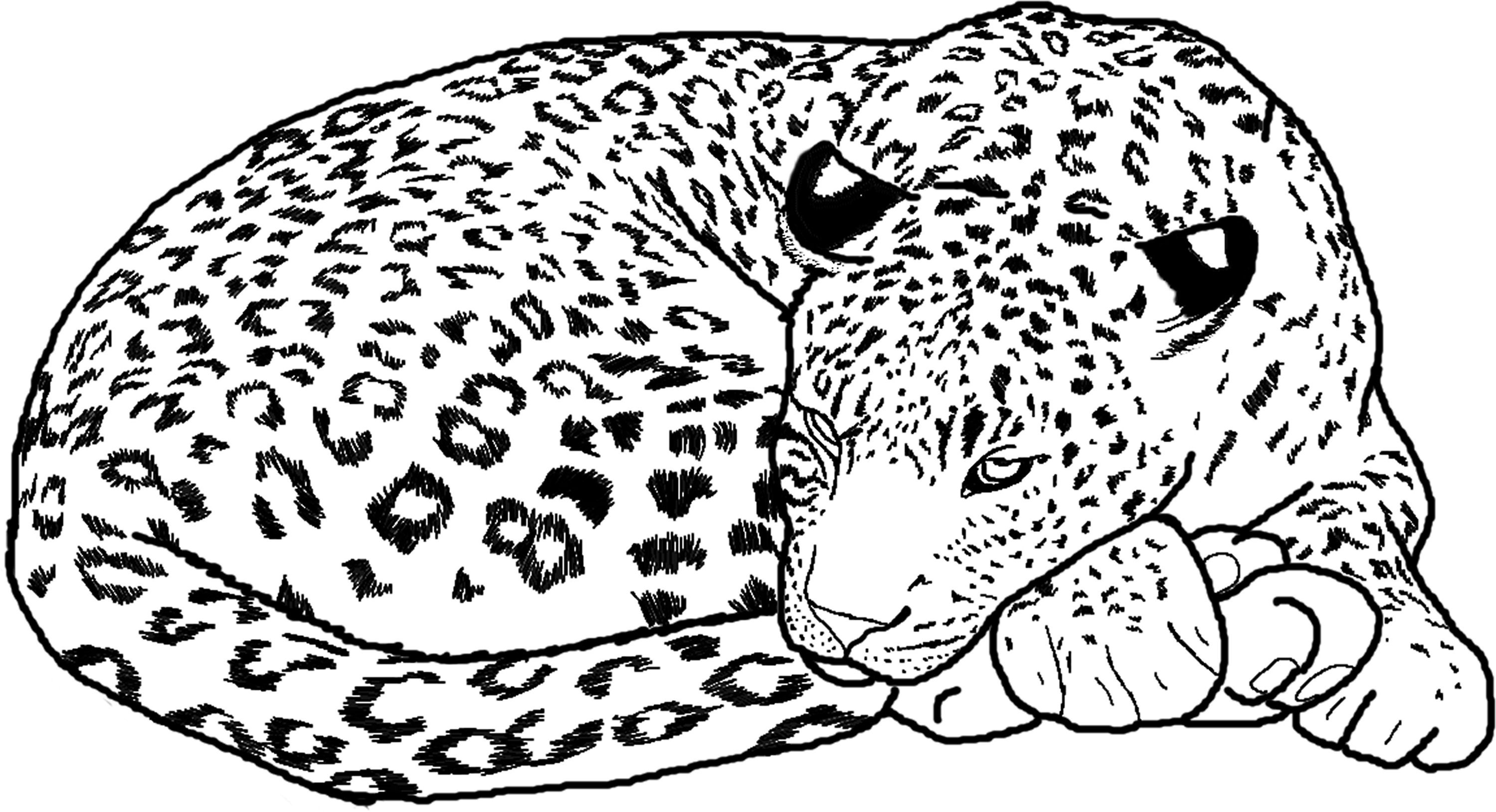 Cheetah Face Coloring Pages