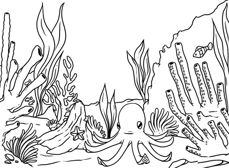 Coral Coloring Pages for Adults