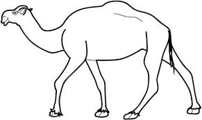 Free Camels Coloring Pages Printable