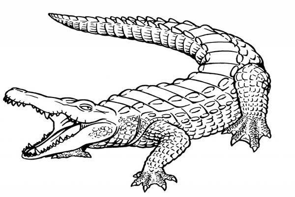 Free Printable Alligators Coloring Pages For Kids