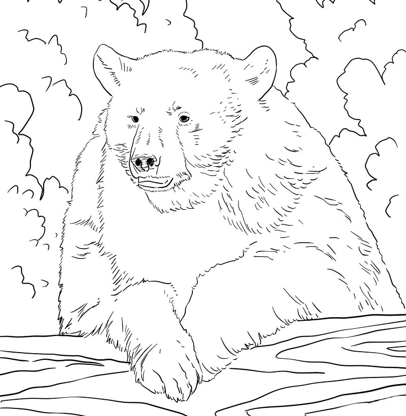 Realistic Bears Coloring Pages