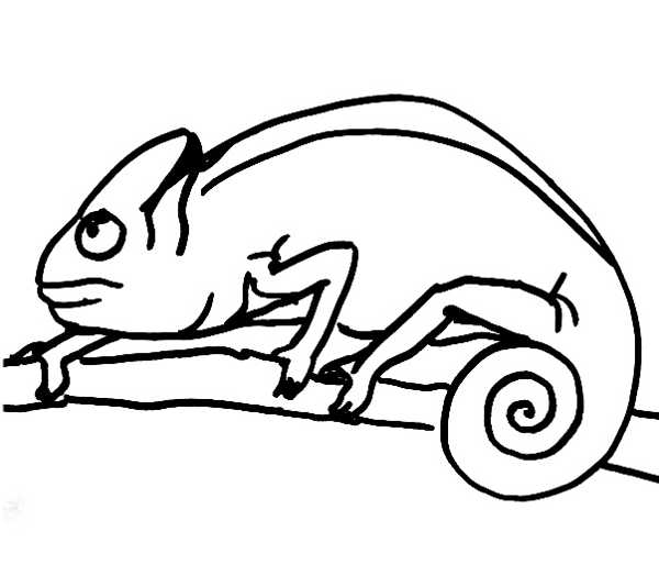 Realistic Chameleon Coloring Pages