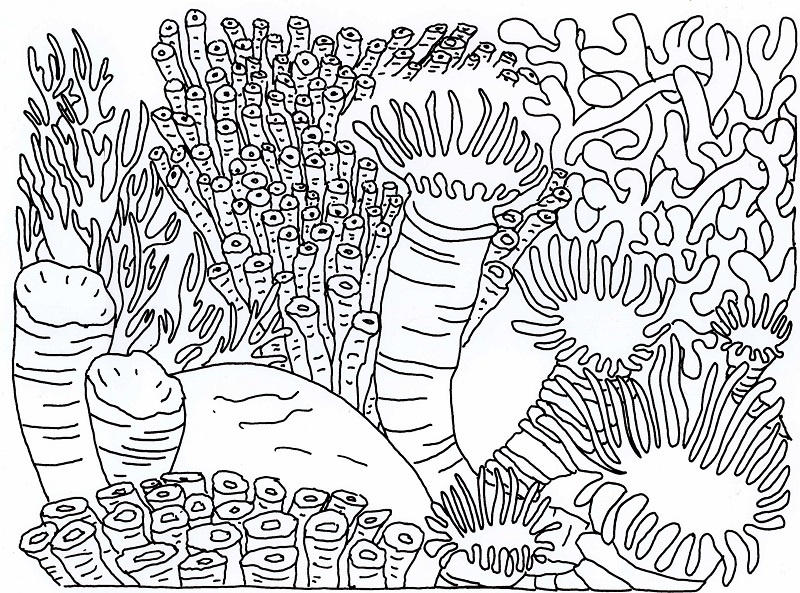 Realistic Coral Coloring Pages